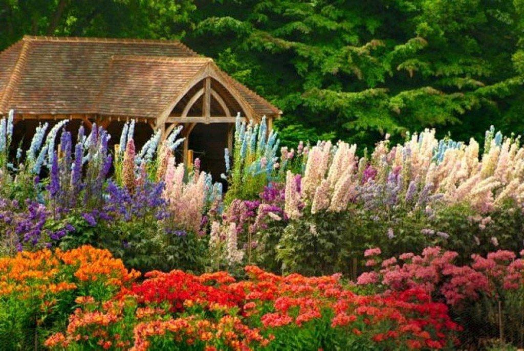 Цветы для сада многолетники